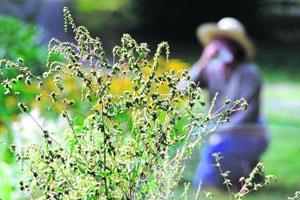Весна – время аллергии
