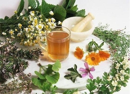 В чем целительная сила лекарственных растений?