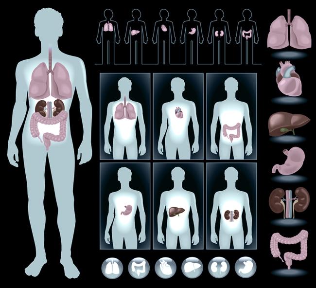 Какие органы защищают наш организм и от чего