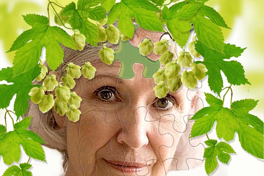 Хмель тормозит развитие болезни Альцгеймера