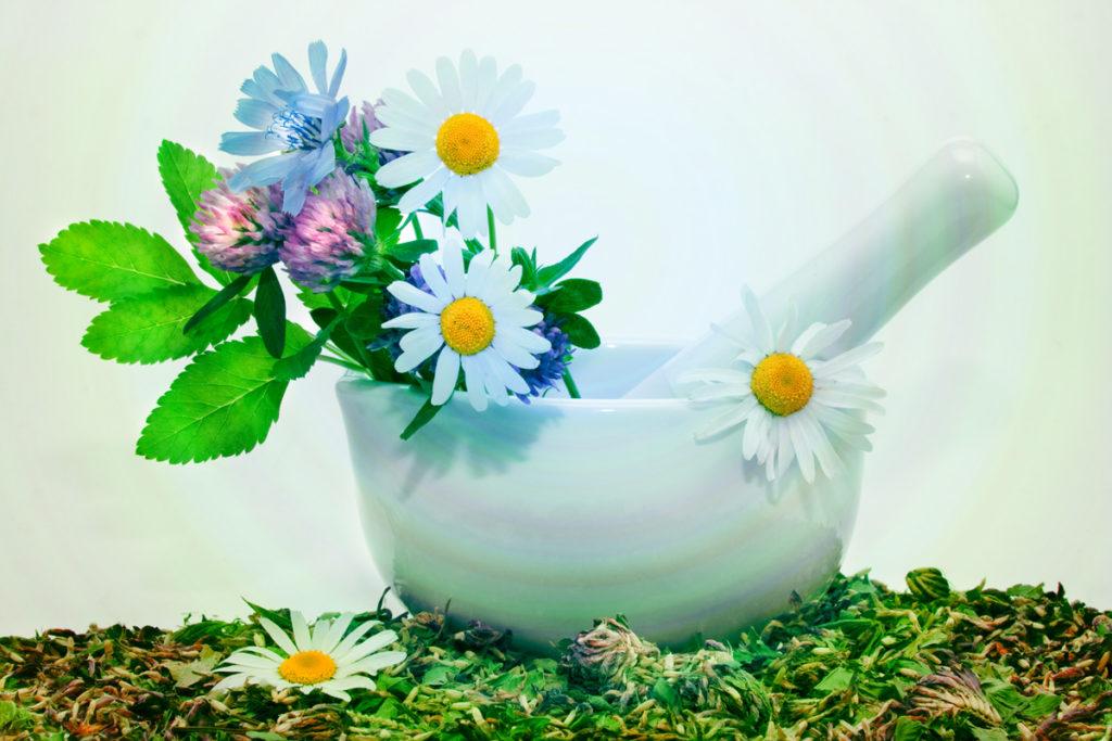 Лечение травами – фитотерапия и ее история
