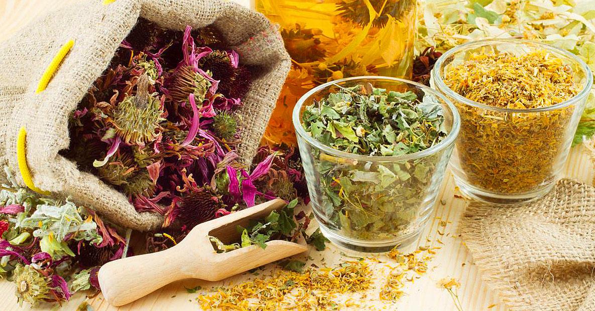 Снижающие холестерин травы. Растения при атеросклерозе