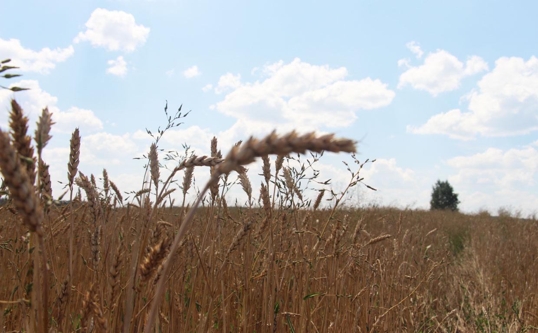 Вести с полей компании Парафарм: уборочная страда в самом разгаре