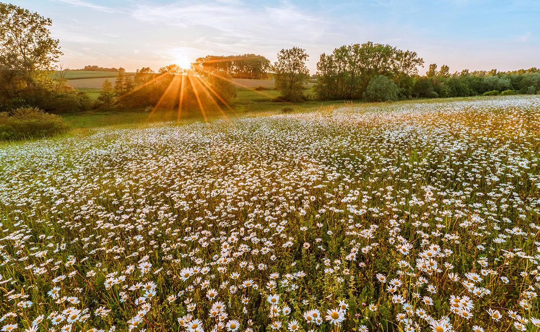 Самые полезные травы – те, что растут в России!