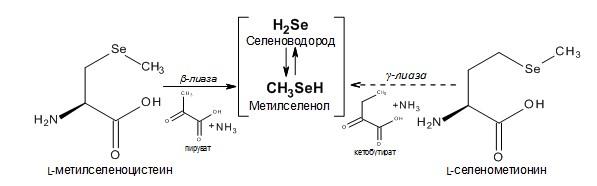 Противоопухолевая активность микроэлемента селена и параметры поиска новых соединений, которые могут ей обладать