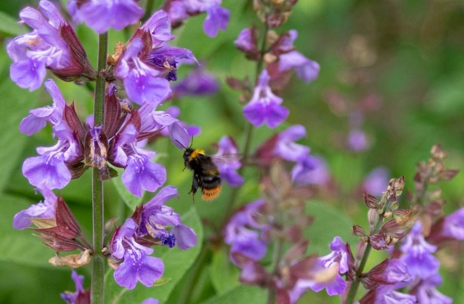 какие растения можно использовать чтобы заварить чай